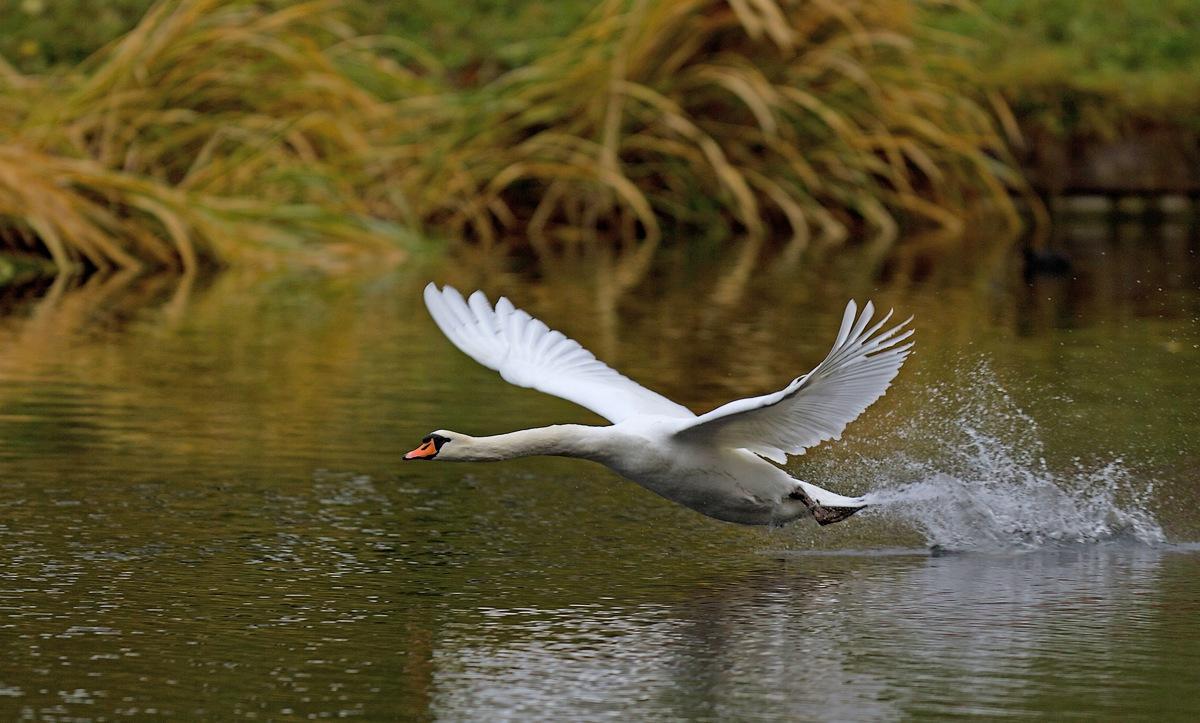 Trafic aérien et sur l'eau (Parc de la Woluwe) 1312010410215685111782072