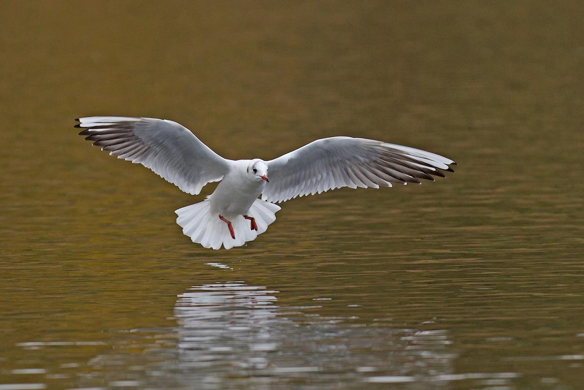 Trafic aérien et sur l'eau (Parc de la Woluwe) 1312010410215685111782075