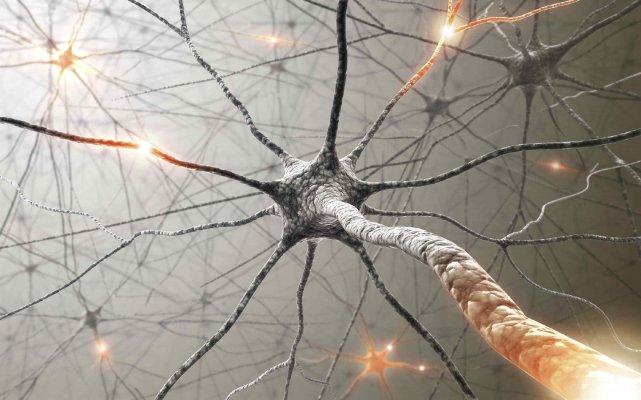 connexions_neuronales