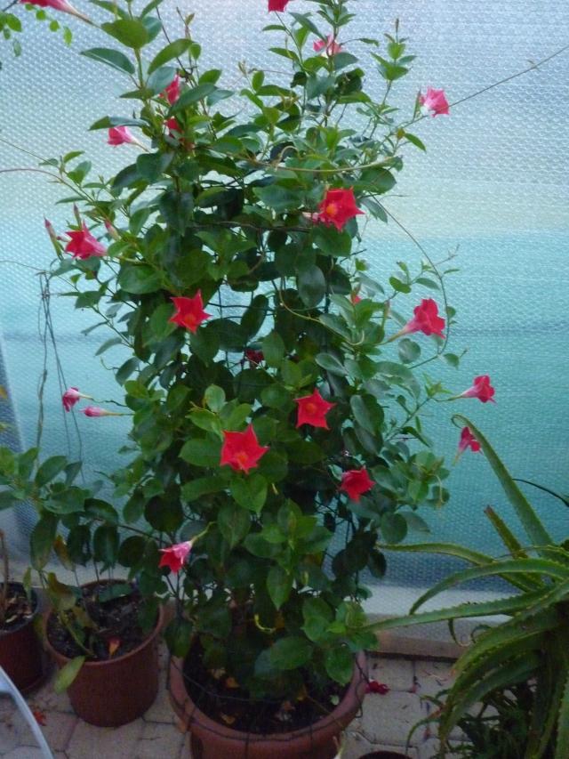 fleurs du jour 1401201128479100211916437