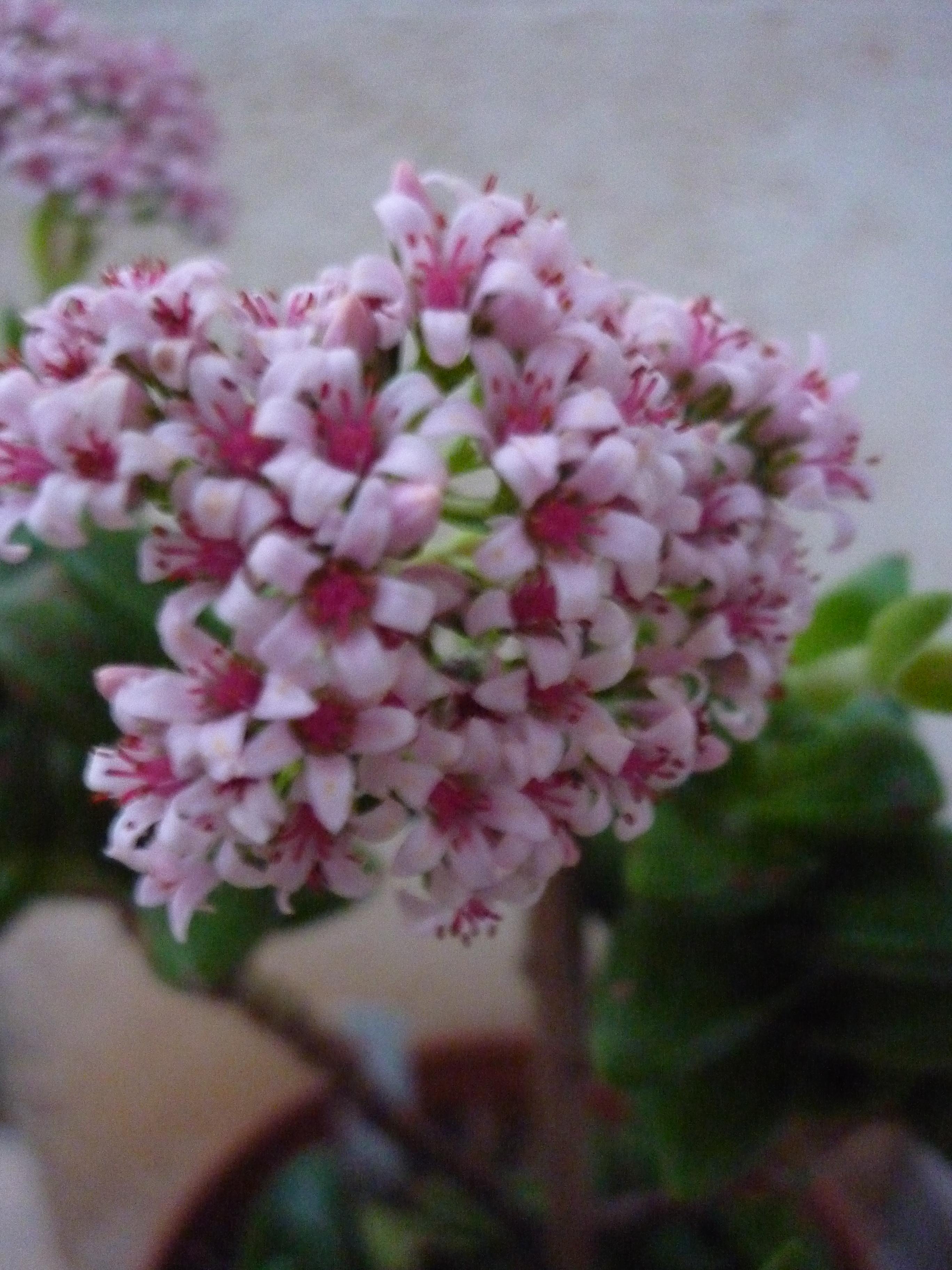 fleurs du jour 1401201143139100211916450