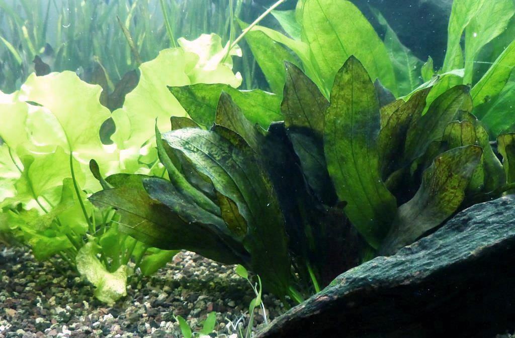 un peu moins de 1000 litres pour des poissons japonais 14022210110712740912006829