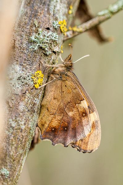 Premières observations de papillons en 2014 1402240718353187612012111