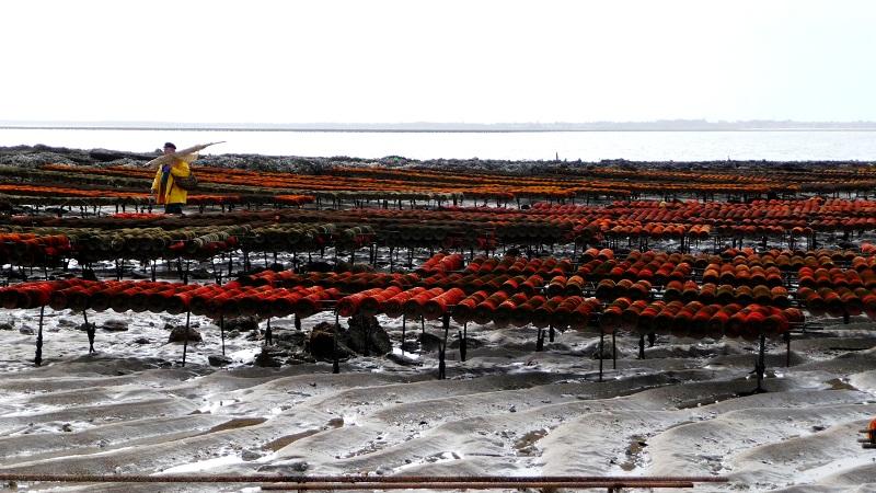 Aux huîtres ! A Chatelaillon 1403010209507657712025136
