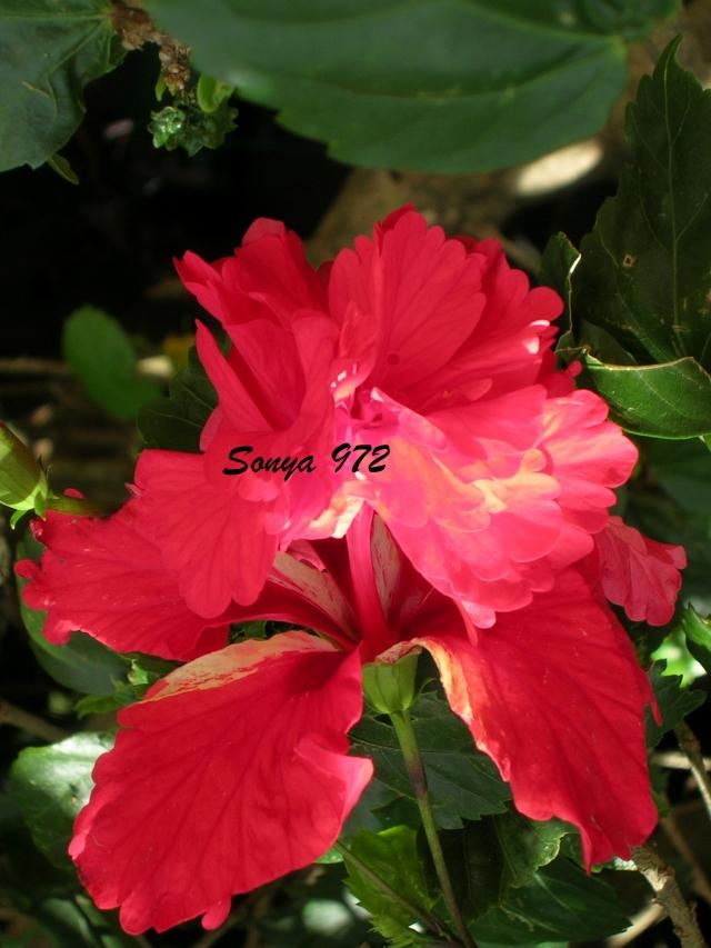 Fruits Fleurs Et Legumes De Martinique Sonya972