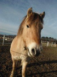 Ici c'est le poney-trombi ! 14030611550215143512042743