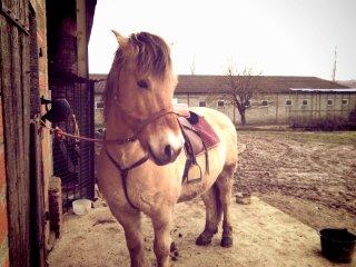 Ici c'est le poney-trombi ! 14030611550415143512042744