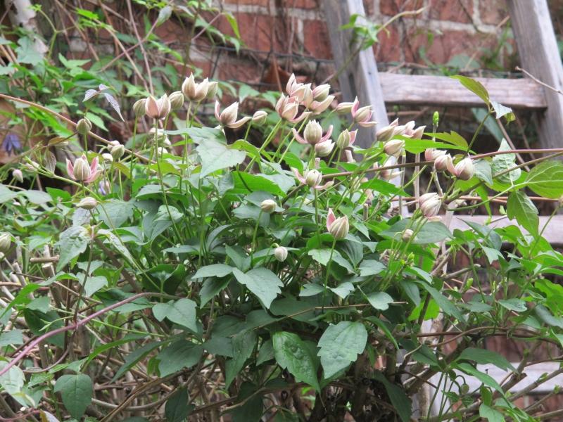 Dans mon jardin ce matin ! 1404061224408300612126586
