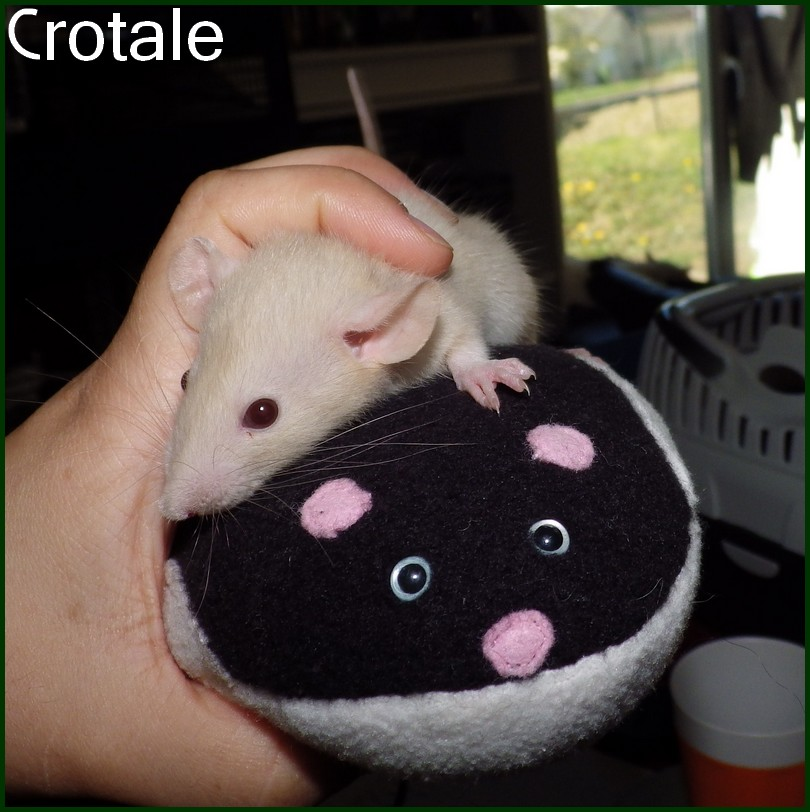 Crotale