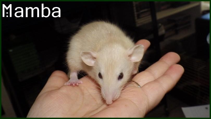 Mamba (2)