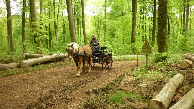 Rando Lyons-la-Forêt (27) 14050810571310529712220818