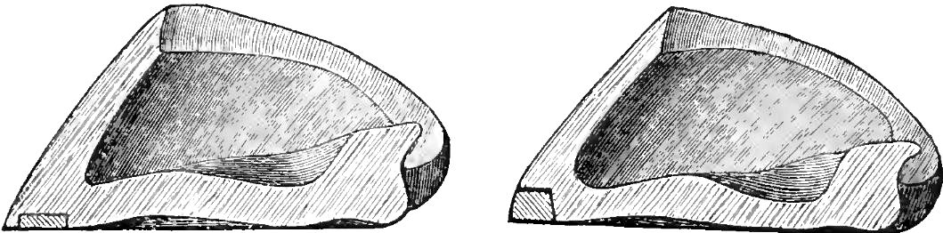 Le chainon manquant entre ferrure et pied nu ! Les ferrures articulées, périplantaires, expansibles 1406120354397723312311407