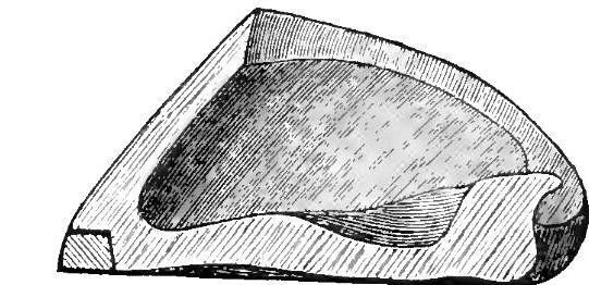 Le chainon manquant entre ferrure et pied nu ! Les ferrures articulées, périplantaires, expansibles 1406120354447723312311412
