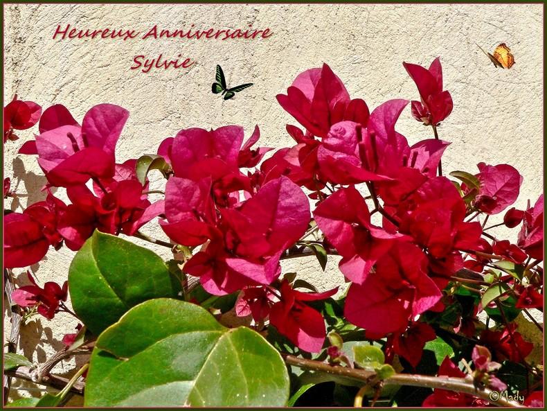 Joyeux Anniversaire Sylvie Ainsyminilise Le Coin Detente