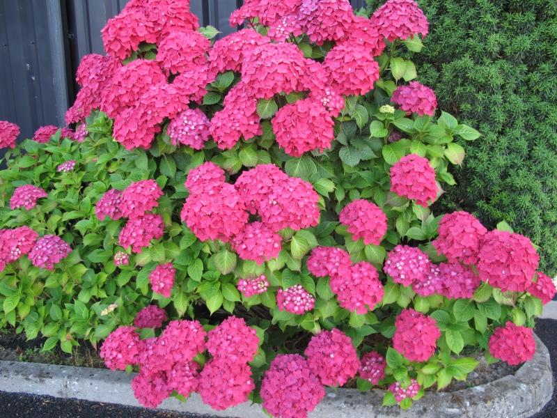 Fleurs ... tout simplement - Page 38 1407060642348300612370046