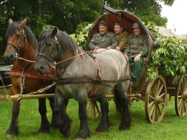 6 juillet 2014 - Fête du cheval à Canappeville (27) 14071004172310529712378548