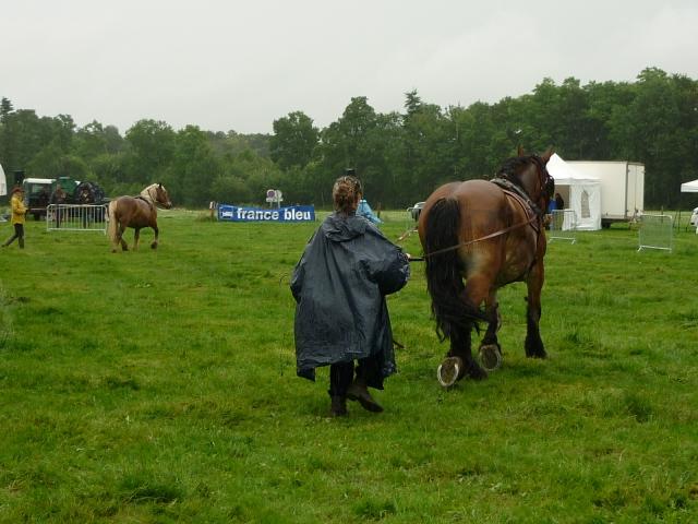6 juillet 2014 - Fête du cheval à Canappeville (27) 14071005091010529712378650