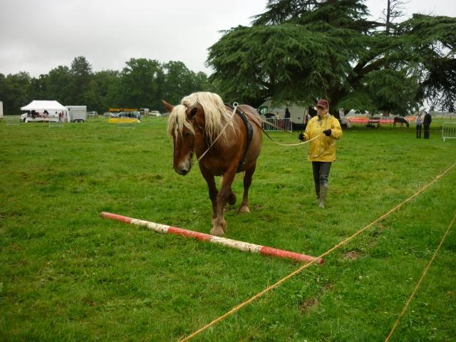 6 juillet 2014 - Fête du cheval à Canappeville (27) 14071005095310529712378654