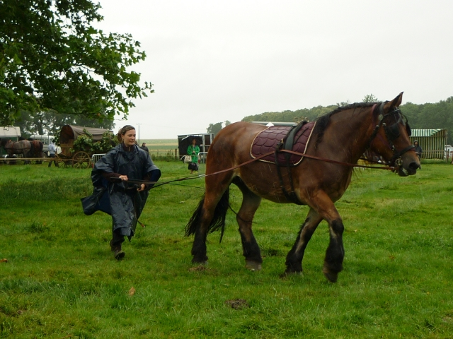 6 juillet 2014 - Fête du cheval à Canappeville (27) 14071005320010529712378695