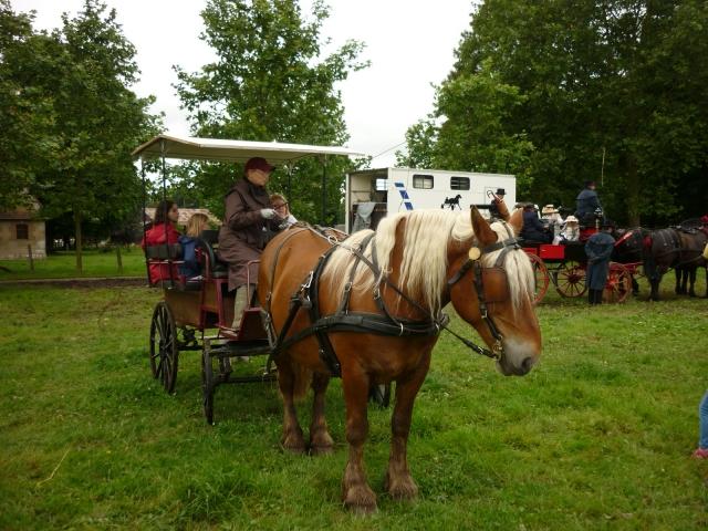 6 juillet 2014 - Fête du cheval à Canappeville (27) 14071006023310529712378811