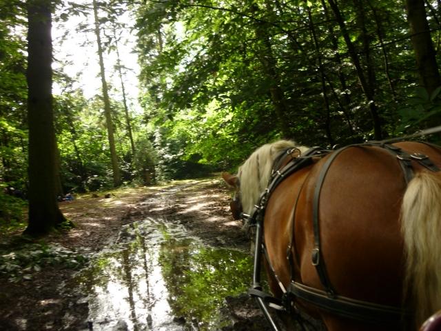 6 juillet 2014 - Fête du cheval à Canappeville (27) 14071006024610529712378816