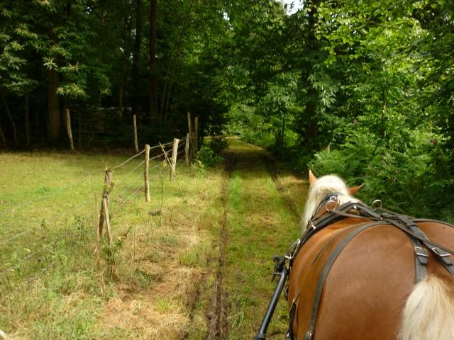 6 juillet 2014 - Fête du cheval à Canappeville (27) 14071006030010529712378820