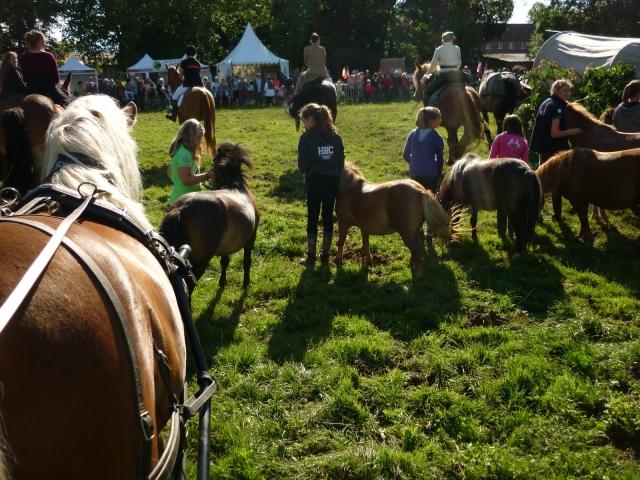6 juillet 2014 - Fête du cheval à Canappeville (27) 14071006302610529712378968