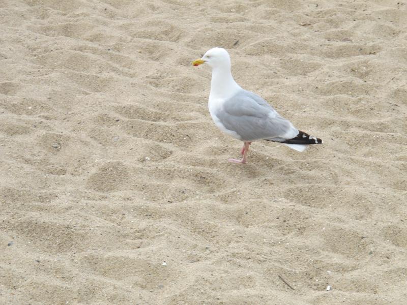 Animaux, oiseaux... etc. tout simplement ! - Page 6 1407121016498300612383099