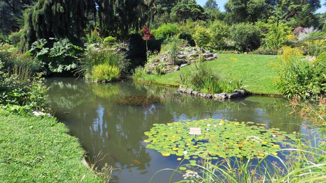 Jardin Botanique 1407170637281858212393694