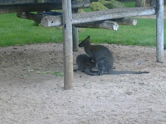 Une journée au zoo d'Amneville 14081110414411002112445535