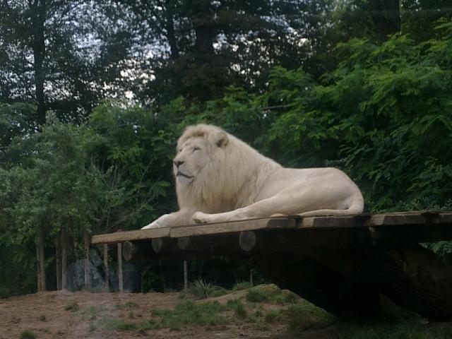 Une journée au zoo d'Amneville 14081110421611002112445537