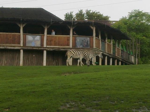 Une journée au zoo d'Amneville 14081111385511002112445577
