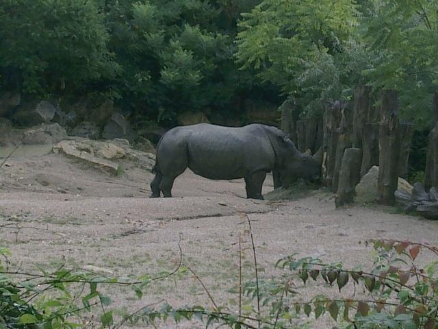 Une journée au zoo d'Amneville 14081111403011002112445582