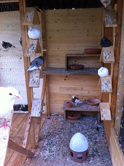 mon pigeonnier fixe 14081311433817655312449850