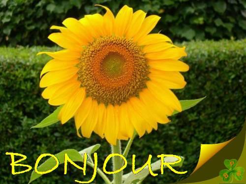Bonjour :Bonsoir de Juillet  2017  - Page 4 1409181013491455412532717