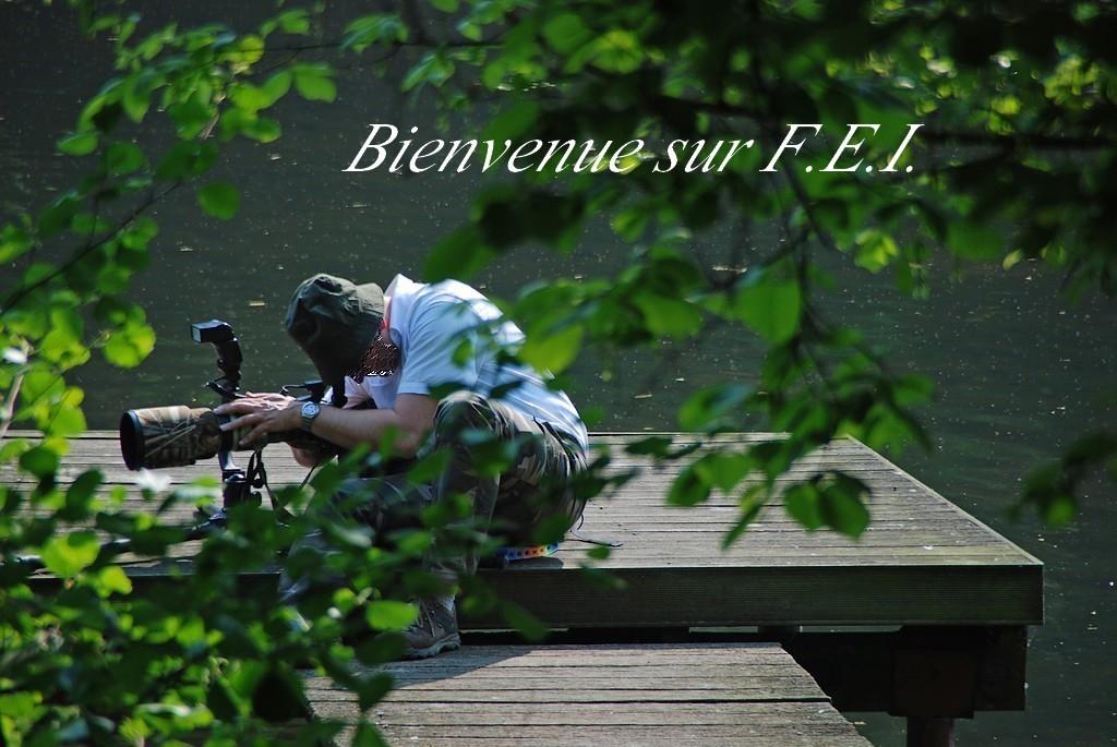 BIENVENUE chez F.E.I. (5)