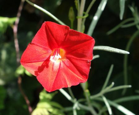 Les plantes, arbustes et arbres issus de nos semis 1410141004527829812610503