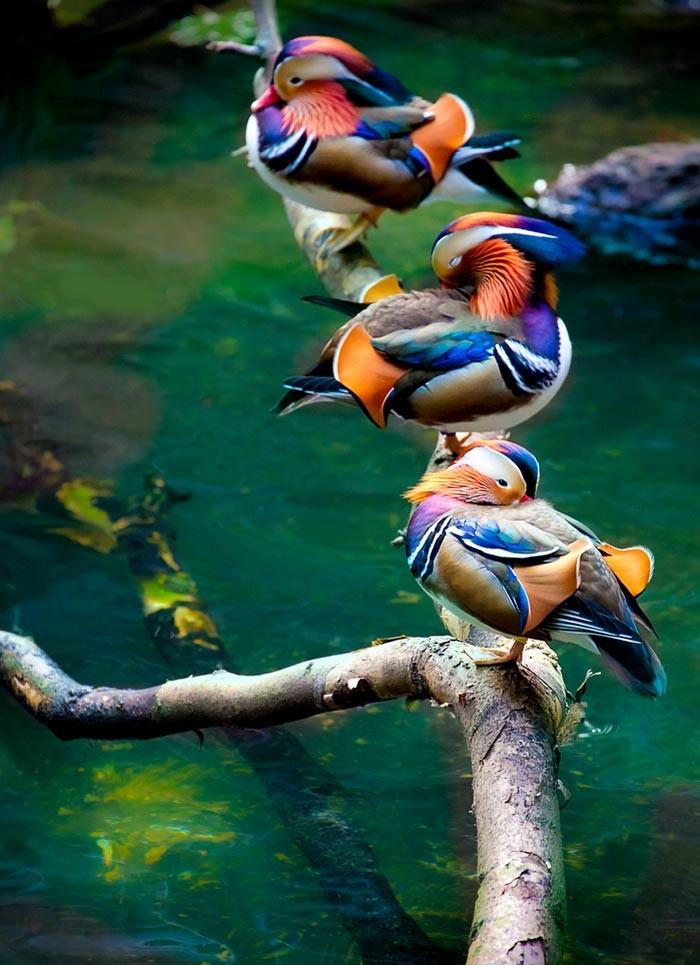 _____________________________________________________belle brochette. dans oiseaux 14111707145918404912710998