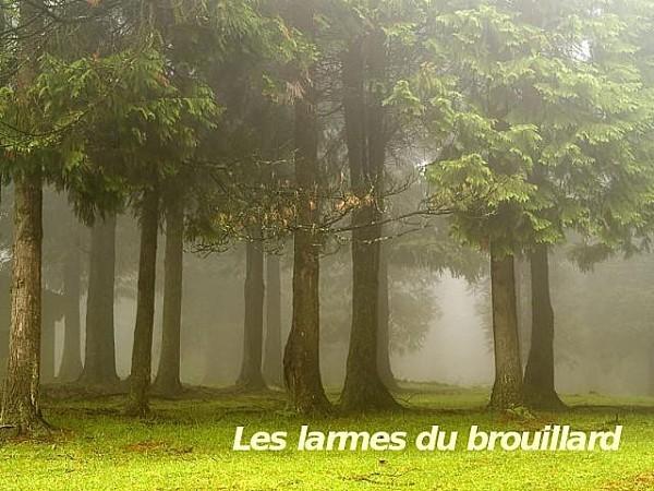'''''''''''''''''----------'on ne dissipe pas le brouillard avec un éventail.. dans paysages 14112607140118404912740760