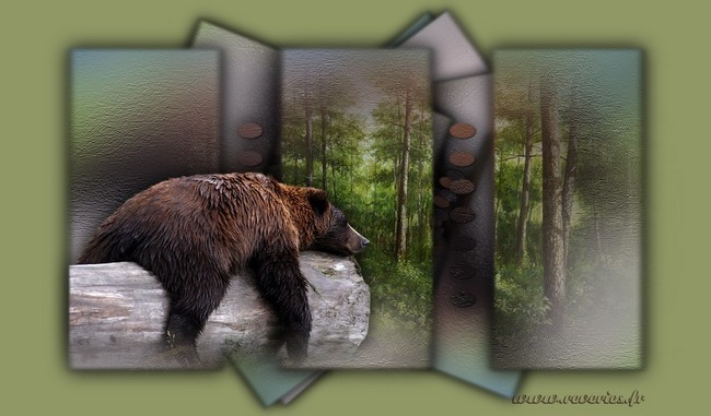 ______________________________________________________c'est l'heure de la sieste! dans animaux 14112901100518404912749226