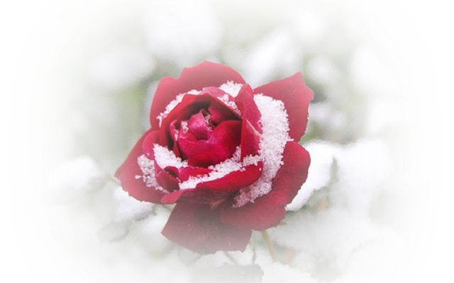 a hiver2