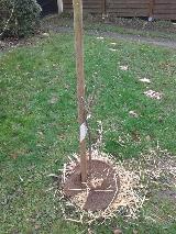 Aide pour tailler mes fruitiers au jardin fruitier for Cerisier nain garden bing