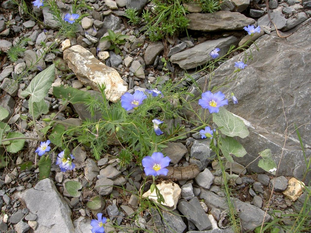 Lin alpin vu à Gelten
