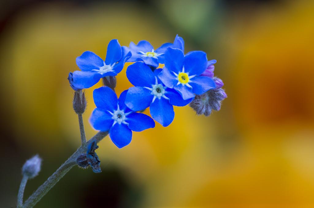 fleurs, 2ème partie 15011511202314885812876498