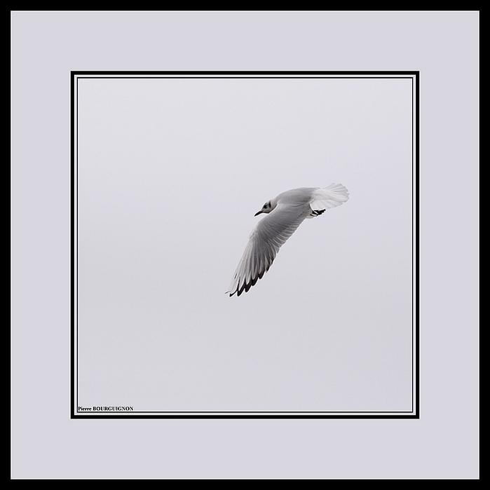 Photographie en noir et blanc par Pierre BOURGUIGNON, photographe animalier, Belgique