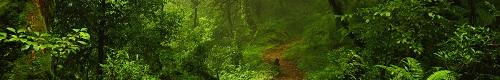 VS 800 GL rouge Saint-Folquin (62) 1501210722022891812894003