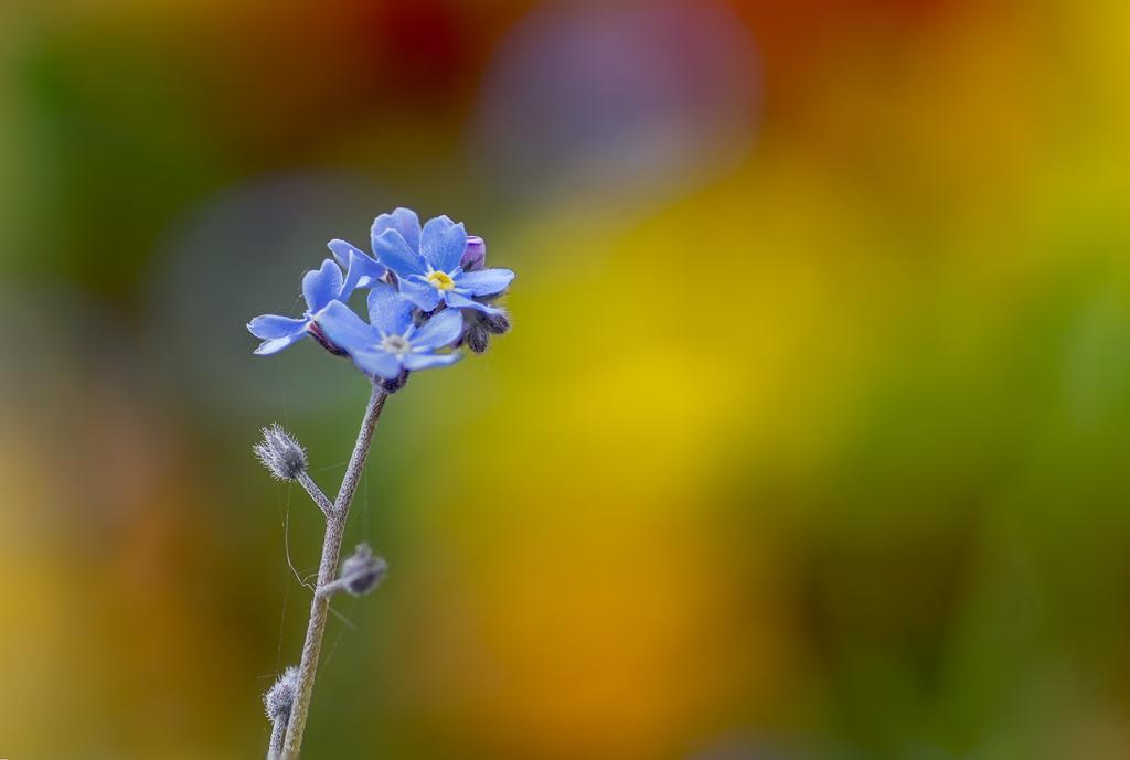encore des fleurs, série 4 15013110225314885812919842