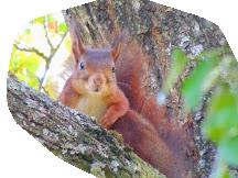 écureuil (8) copie