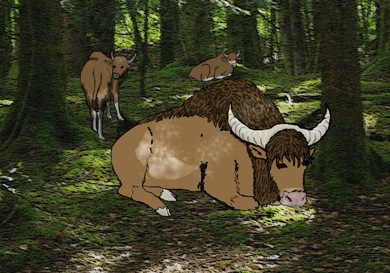 Boeuf manate - mammifère bovin 15042702264912741213211054