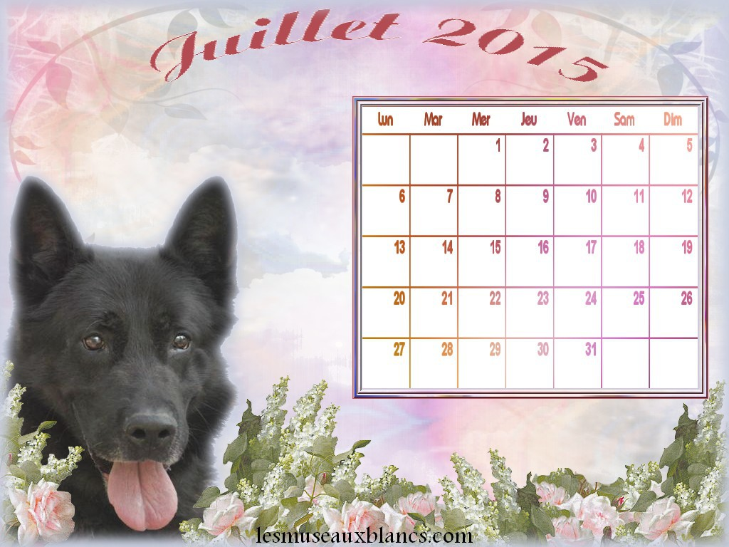calendrier chien juillet 2015